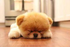 moi j'fais une sieste