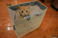 Kitten in a bag via @EmrgencyKittens