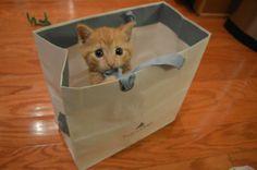 Kitten in a bag via @EmrgencyKittens