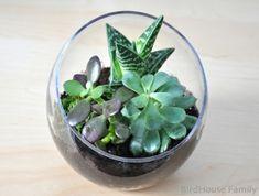 diy succulent terrarium by claudette