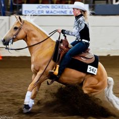 Hello I am Sierra and this is my horse Chase we love to rein !Chase is a quarter horse AQHA gelding!