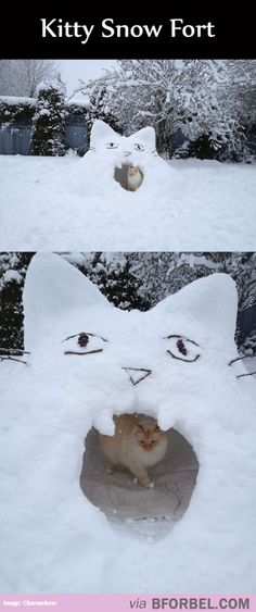 A Snow Fort Fit For A Cat…