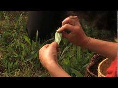 Reconnaître et cuisiner les plantes sauvages