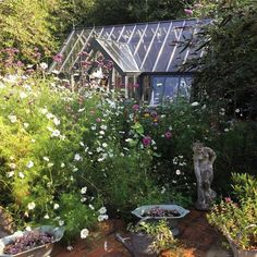 Last photo of my greenhouse 'suffocated' by the cosmos, verbena etc! I hope you've enjoyed your summer in the garden as much as I have. #cottage #cottagegarden #brocante #antiques #garden #gardenflowers #gardening #greenhouse #gardenstatue #planter #wateringcan #nature