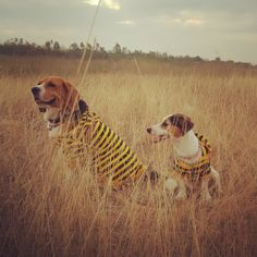 Cooper&Moo toon