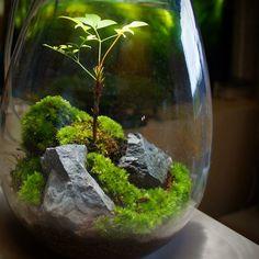 苔あかり #モスライト#mosslight #LED#Lighting#コケ#moss#terrarium