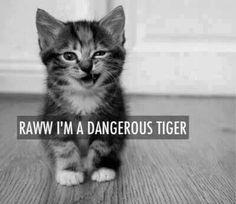 Fear the rawwwwww