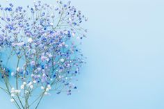 Download Bunch Of Fresh Blue Flower Twigs for free