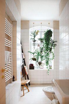 plantes suspendues fenetre salle de bain