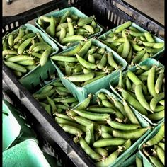 #Organic Sugar Snap Peas, the edible pod type at all markets this weekend! #SosnickiHarvest