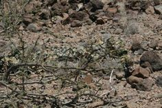 Sniper can you see me Sniper Camouflage, Military Camouflage, Special Ops, Special Forces, Rifles, Ghost Soldiers, Ghillie Suit, Military Weapons, Military Post