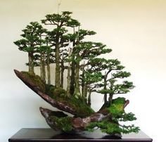 Bonsai is a kind of Art. It is not so easy to grow a Bonsai. It needs hard work to grow a Bonsai. The main thing is that the tree will grow and will be aged but it will get very few minerals. Small Trees, Miniature Trees, Garden Art, Miniature Garden, Ikebana, Bonsai Forest, Japanese Garden, Plants, Planting Flowers