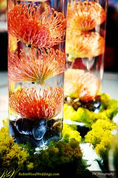 Floating Protea in Illuminated Cylinders #weddingflowers #pincushionprotea #centerpieces