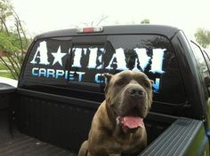 Our mascot loves riding along with us in search of stains! #dogsareawesome #carpetcleaning