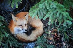 Daily Dose of Green + a fox via Abbey Goes Design Scouting. I love Abbey Nova.