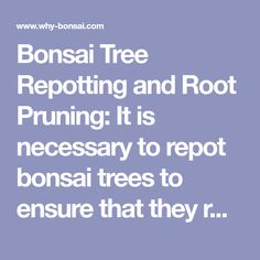 Bonsai Tree Repotting and Root Pruning: It is necessary to repot bonsai trees to ensure that they remain healthy and continue to grow well. Well developed fibrous roots are essential for balanced, even growth and these are produced by root pruning. Bonsai Pruning, Bonsai Garden, Bonsai Trees, Well Well, Plant Care, Hobbies And Crafts, Roots, Healthy, Zen