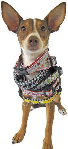 tuto sac pour toutou | Dog carrier patterns | Pinterest ...