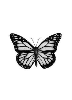 Black & White Poster Order black and white pictures online Desenio Poster S . - Black & White Poster Order black and white pictures online Desenio Poster Black White Monarch Butterfly Meaning, Monarch Butterfly Tattoo, Butterfly Drawing, Butterfly Tattoo Designs, Butterfly Painting, Butterfly Wallpaper, Vintage Butterfly Tattoo, Butterfly Costume, Butterfly Design