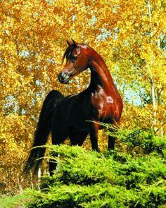 Fall Arabian beauty