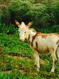 My new girl Sasha the donkey
