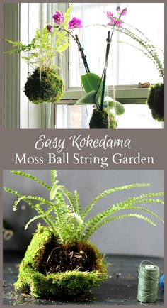 Learn an easy way to make Kokedama to create your own indoor string garden. This tutorial requires just a few items and can be made in less than an hour.