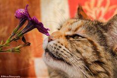 Alicia loves flowers by Natassja Berg Hviid on 500px