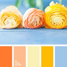 Bright palette of warm tones is chilled by sky-blue. Shades of orange, peach, pastel yellow, bright yellow looks delightful in the design of a kitchen.