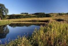 Harewood Estate - Pond by Harewood House, via Flickr