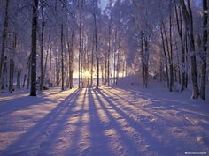 Early morning Winter Sun.......