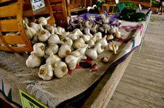 Ithaca, NY Farmers Market