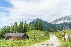 Idyllische Almwiesen, Hüttenromantik und phänomenale Panoramen. Die Große Reibn führt in vier Etappen rund um den Königssee im Nationalpark Berchtesgaden.