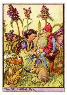 Self-Heal Flower Fairy » Flower Fairy Prints- Vintage Fairy Prints by Cicely Mary Barker for sale