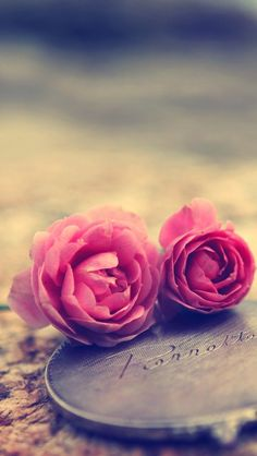 Miniature Roses iPhone 5s Wallpaper Download | iPhone Wallpapers, iPad wallpapers One-stop Download