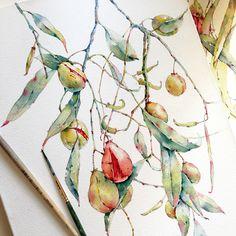 Denhamia in watercolor on Behance