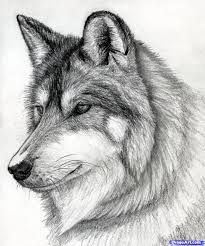 easy drawing of wolves in pencil