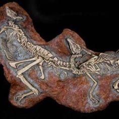 Fossilised bones of young Sinornithomimus Bones, Lion Sculpture, Statue, Rock, Reading, Image, Art, Art Background, Skirt