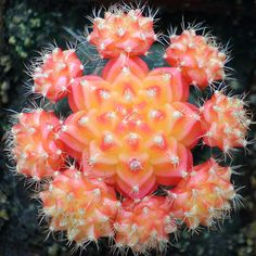 Grafted Cactus | Recent Photos The Commons Getty Collection Galleries World Map App ...