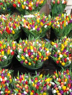 Tulips at the Floating Flower Market - Amsterdam