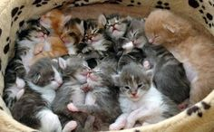 TOP 30 Cats and Kittens