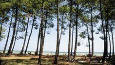 Landes : lac de Biscarrosse