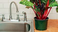 """CSA farmer discovered potential ease of growing indoors quite by accident and wrote this book: """"Indoor Kitchen Gardening: Turn Your Home Into a Year-Round Vegetable Garden"""""""