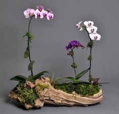 Natural container with orchids
