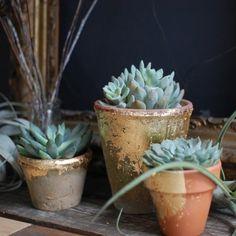 The Design Sponge: DIY gold leaf terracotta pots Diy Projects Apartment, Diy Projects To Try, Leaf Projects, Gold Diy, Gold Gold, Diy Planters, Planter Pots, Succulent Pots, Potted Succulents