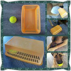 Spel 27 (hondenspel hond spel denkwerk hersenwerk brain dog game play diy)