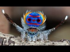 sparklemuffin and skeletor spiders- new species