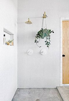 White penny tile on walls of shower with hanging green plant.