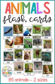 Animals Flash Cards with Real Pictures by Mrs Sarah Diogenes Vocabulary Games, Literacy Stations, Literacy Centers, First Grade Curriculum, First Grade Science, Daily 5 Activities, Ell Students, Elementary Science