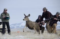Wyoming Cooperative Fish and Wildlife Research Unit | Enjoy the Wildlife!