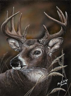 """Realism by Amy Keller-Rempp Art. """"Autumn Day"""", by Original sold to a couple in Montana. Very popular among nature lovers and hunters. Available in giclee print and fine art cards. Aboriginal Artists, Art Cards, Print Format, Hunters, Montana, Giclee Print, Amy, Wildlife, Lovers"""