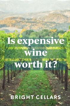 Many believe that the more expensive the bottle the better it will taste – this isn't exactly true! There are many different factors that go into why a wine may be more expensive! Click to find out if a more expensive wine is truly worth it! Bright Cellars, Wine Guide, Sweet Wine, Sustainable Practices, Expensive Wine, Growing Grapes, Cheap Wine, Food Tasting, Pop Out